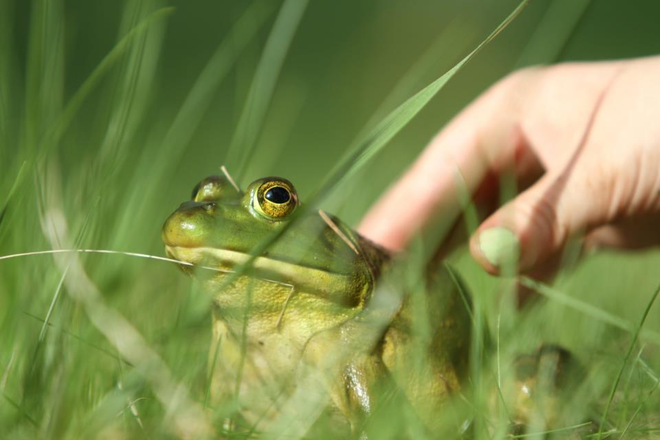 jessicafrog2